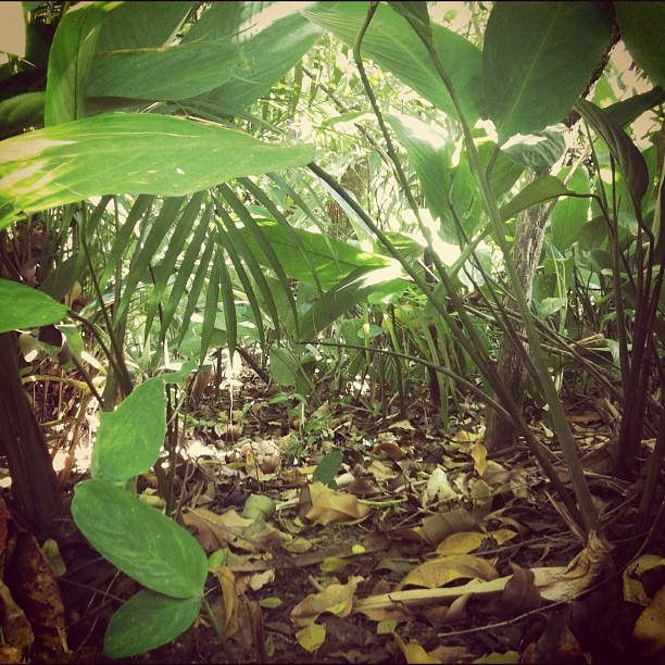 #nature #natureza #plantas #day #dia #verde #green (Publicado com o Instagram)
