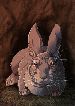 Watership Down: Threarah, the old chief rabbit!