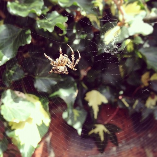 He's just making a wee web..  (Taken with Instagram)