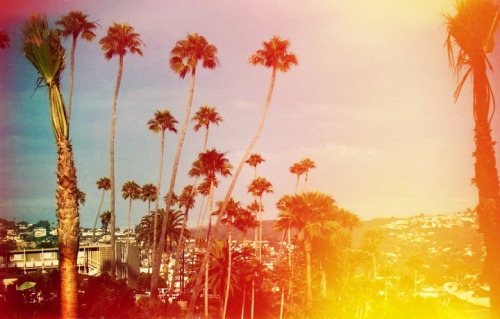 darianblake:  California palm trees.