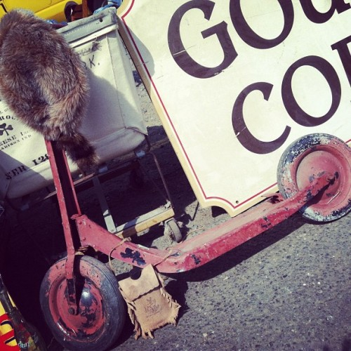 Raccoon hat with the scooter. #searchandrescue  (Taken with Instagram)