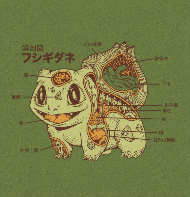 xombiedirge:  Bulbasaur Anatomy by Ryan Mauskopf / Website