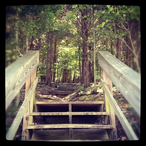 Walking a small trail (Taken with Instagram at Edgar Evins State Park Cabins)