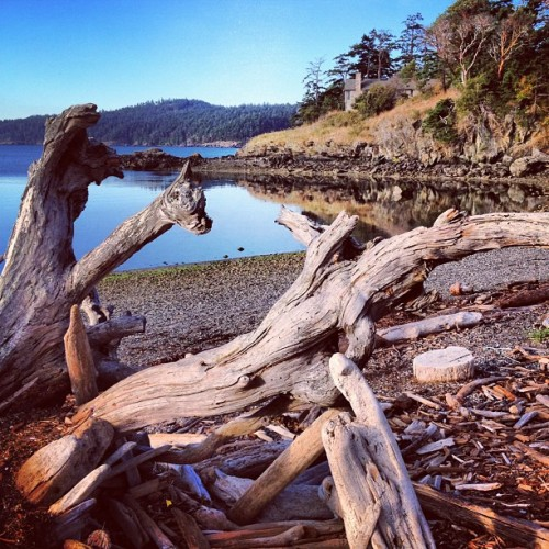 Driftwood on Eastsound Beach.  (Taken with Instagram at Eastsound Beach)