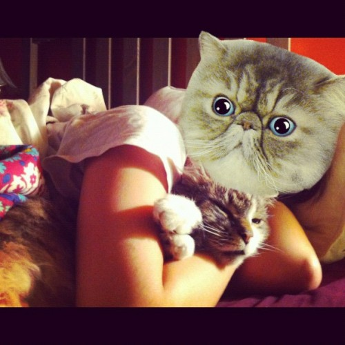 #catwang (Taken with Instagram)