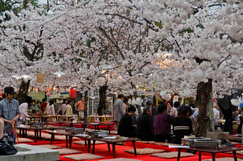 Kyōto sakura festival by Mathias Verdon on Flickr.