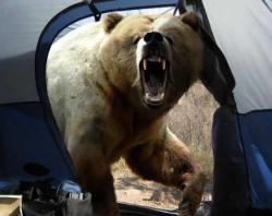 Why you screaming? It's a tiny bear Phil. Look. It doesn't even fill a tent entrance.