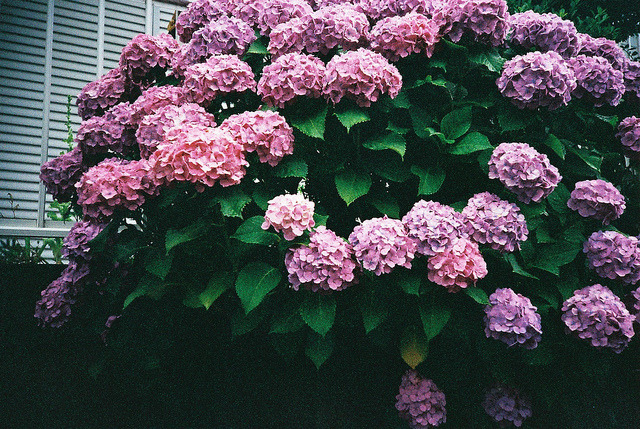 untitled by risa-i on Flickr.