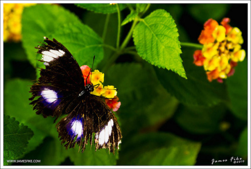 Victoria Butterfly Gardens on Flickr.