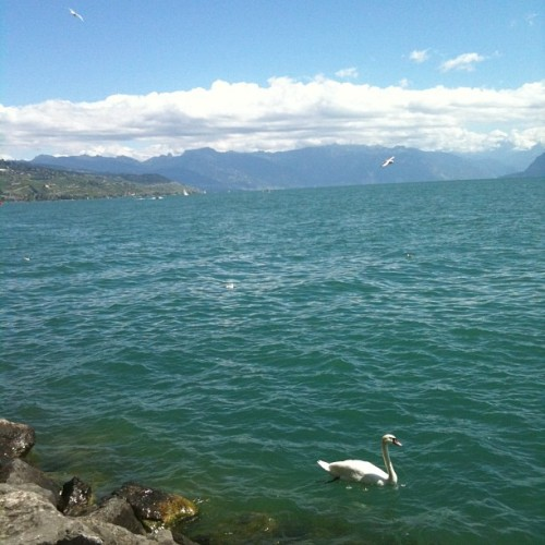 #lausanne #switzerland #nofilter  (Taken with Instagram)