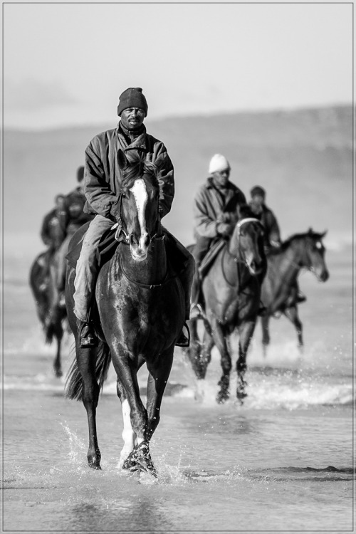 watching our racehorse being trained on the beach south of Cape Town     winter    my racehorse, our racehorse love black and white