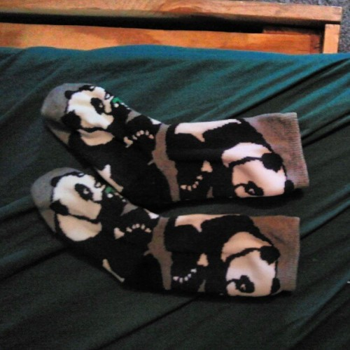 pandaking609:  #pandas #socks #lrg (Taken with Instagram)