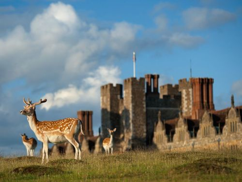 animals-animals-animals: Fallow Deer (by Jim Richardson)
