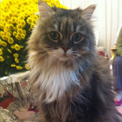 "thefluffingtonpost:  Cat Lost in Thought for 20 Minutes A cat named Simba caught himself drifting away in a daydream early Sunday. When he looked at the clock, he found 20 minutes had passed. ""Not sure what he was thinking about,"" says Gordon Paulson, an eye-witness. ""Probably white-water rafting, knowing him."" Via Selin Ayangolu."