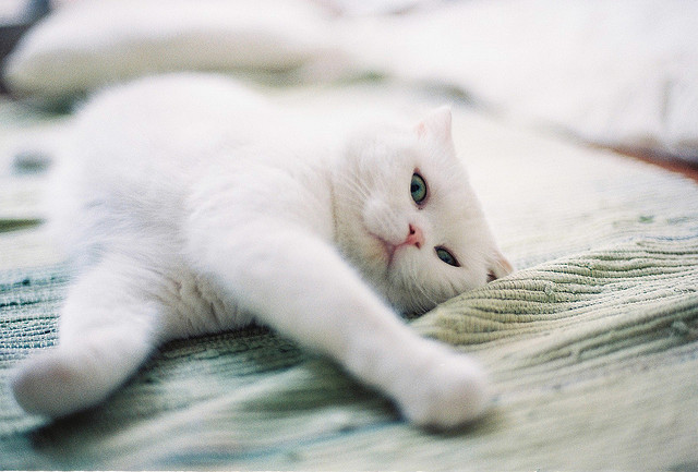 kittenjoy:  家貓的生活 by Bird in WhitE on Flickr.