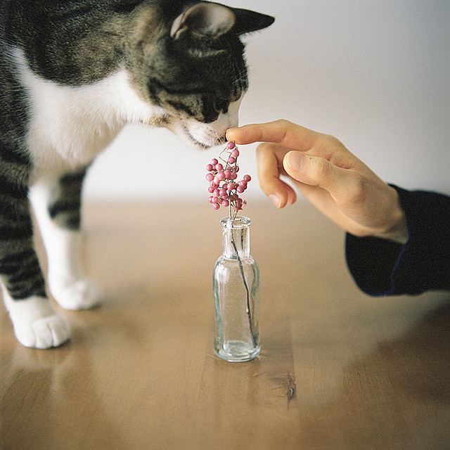 kittenjoy:  tanishi #1.1 by Ta  on Flickr.