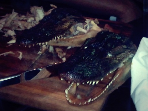 #gator #food #chicago gator dinner. Love it.  (via fhotoroom)