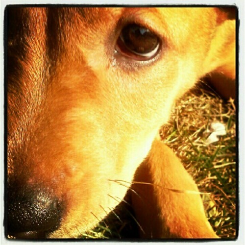 Extreme puppy closeup! (Taken with Instagram)