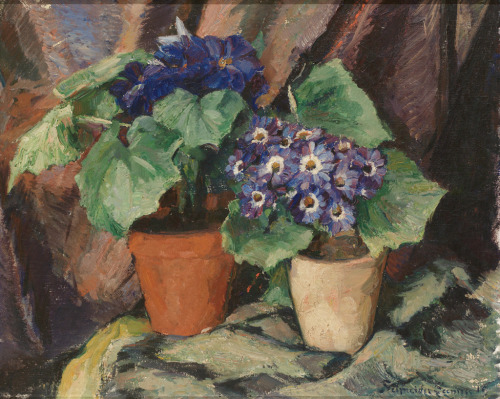 """Still Life With Cineraria"" Leo Schneider-Seenuss. Germany, born in 1868. Via poboh (from whom I posted several this week) the last of my 19th Century paintings mini-theme. Next: robots!"