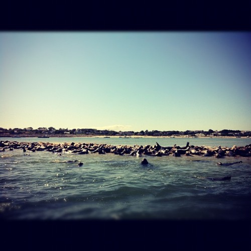 Seals upon seals upon seals  (Taken with Instagram)