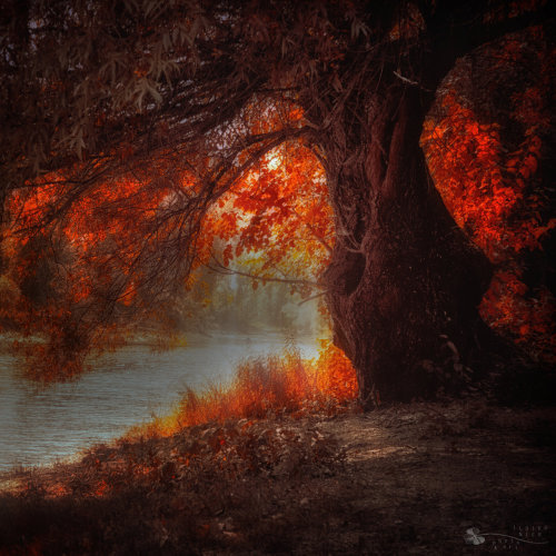 crescentmoon06:  Love me under the burning tree by ~ildiko-neer