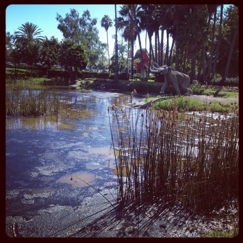 La Brea tar pits.  (Taken with Instagram at La Brea Tar Pits)
