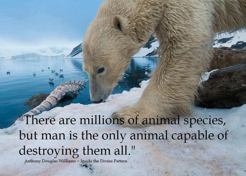 earthandanimals:  This is the absolute truth and it is heart breaking to watch it happen.