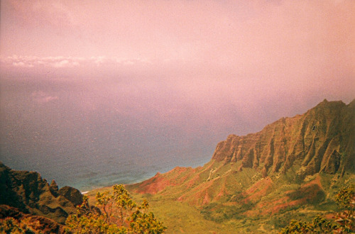 le hawaii en rose by eanniejay on Flickr.