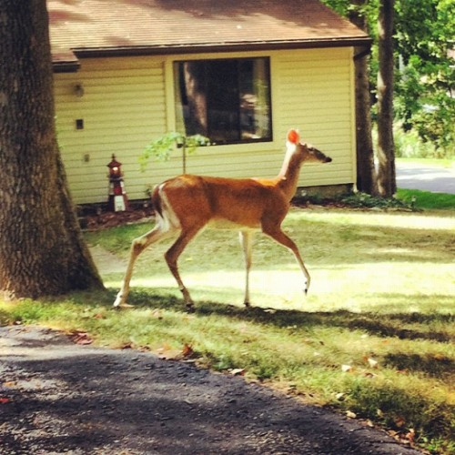 Oh deer! Oh my! (Taken with Instagram)