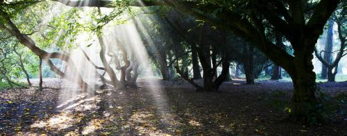 Woodland Trust Photo Competition 2012: Winning photo by Mike Stephenson taken in Westonbirt Arboretum, Tetbury.