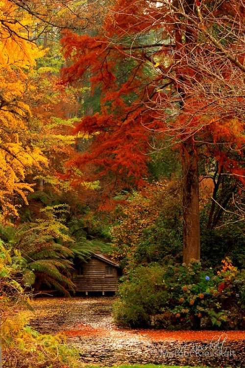 Forest House, Dandenong Mountains, Australia via pinterest