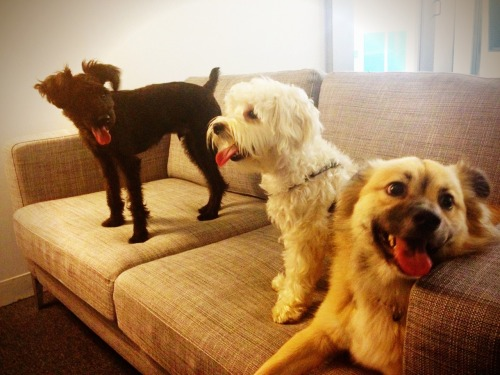 "thefluffingtonpost:  Puppy Invites Friends Over to Watch Animal Planet A New York City pup named Wally sent Evites to his friends late Thursday in the hopes they were free to come over and watch some Animal Planet with him on the weekend. Two of his pals, Franklin and Holly, were able to attend. Witnesses say fun was had by all, though not everyone could make it. ""The plans were too last-minute — I had another obligation,"" says Roberta Rolan, who declined the invitation. ""Also, who sends an Evite? What is this, 2002?"" Submitted by Darren Tome."