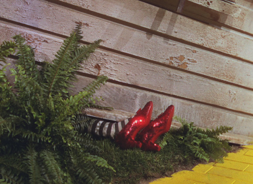 suicideblonde:  The Wizard of Oz