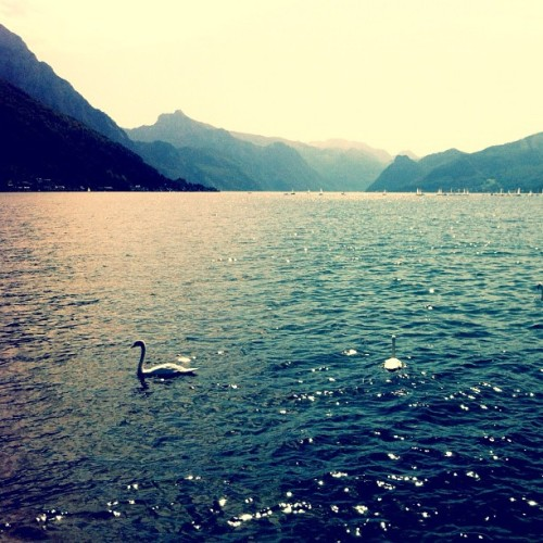 I feel peace here #traunsee #gmunden #oö #lake #austria #scenery #swan #water #mountain #nofilter #orth #schloss #castle #iphone4 #iphoneonly  (Taken with Instagram at Gmunden)