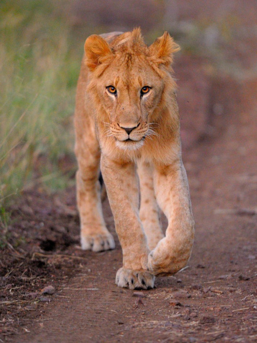 llbwwb:  You getting out of my way or what? (by John Kok)