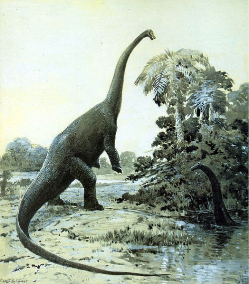 "rhamphotheca:  Diplodocus rearing up (1911) by Charles Knight ""Note that this image may be appropriate to illustrate obsolete paleontological views."""