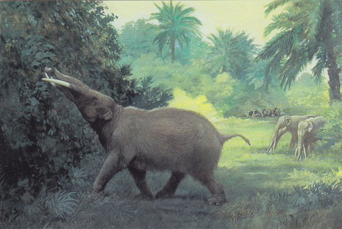 Gomphotherium (1901) by Charles R. Knight  - for the American Museum Natural History I want you to remember that there have been, and will be, more things in existence than you can even begin to imagine. Every day its something new. The sheer weight and volume of everything you will never know is truly amazing.