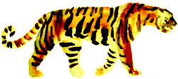 tiger. watercolors/multimedia. brendan garbee