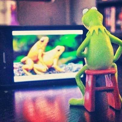 National Geographic = Kermit's playground