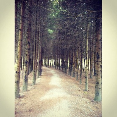 Bike trail through the forest. (Taken with Instagram at Dans La Forêt Enchantée)