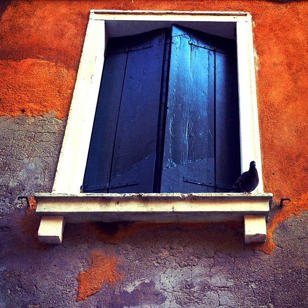 A bird outside the window in #Venice. Edited with the Wood Camera app — available in the App Store