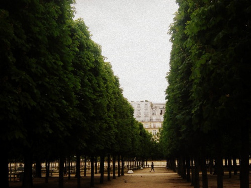 tuileries, trees by Le Portillon on Flickr.