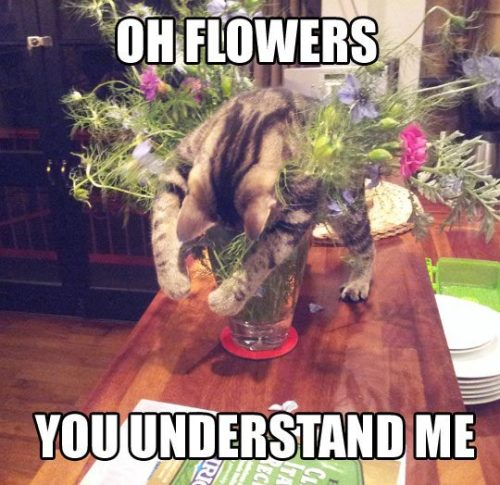 oh flowers? funny images I bet hindi ikaw yon. :) follow us for more quotes