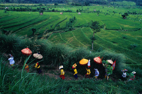 Procession through the rice fields near Tampaksiring in Bali.