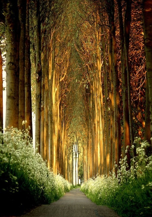 spirit-dweller:  Church of Trees, Belgium.