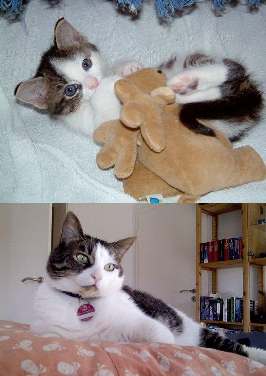 Then and Now Photo via Amore Per Gli Animali