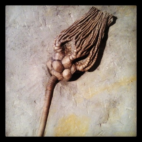 A fossilized crinoid (Taken with Instagram at Indiana State Museum)
