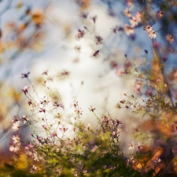 mykindafairytalee:  The cloud and the bee by *Al-Baum