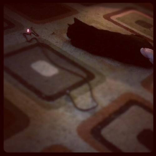 Phoebe the laser huntress. (Taken with Instagram)