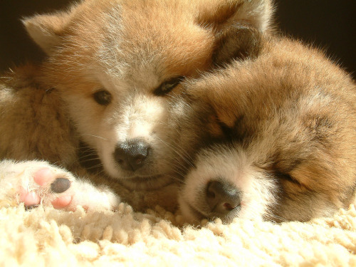 thefluffingtonpost:  PHOTO OP: Puppy Brothers Via anna christina.